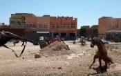 لحظة إطلاق الرصاص على حصان مسعور باقليم لفقيه بن صالح